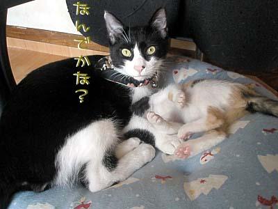 羽稚20091005121127832