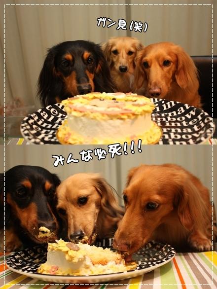 ケーキウマウマ中☆