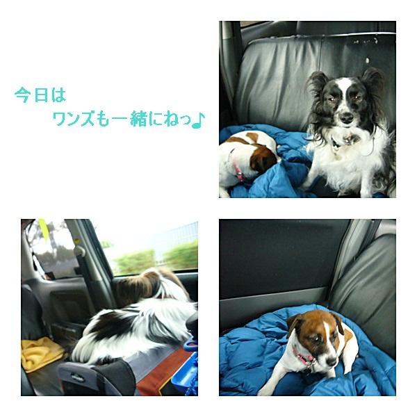 catsA_20111209100918.jpg