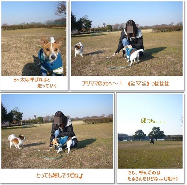 catsA_20120117104420.jpg