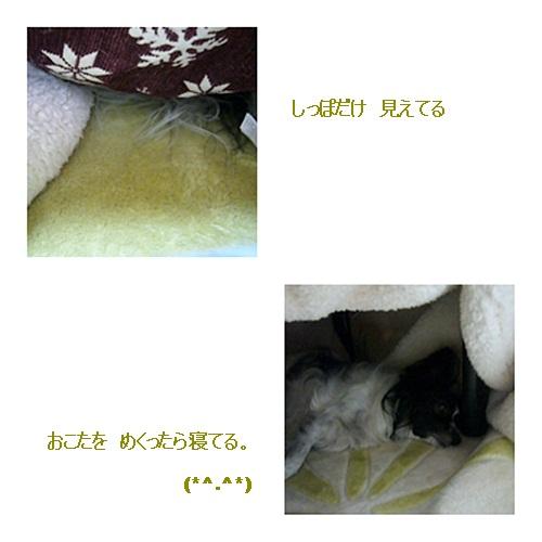 cats_20111129204350.jpg