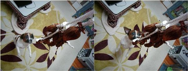 cats_20111221160128.jpg