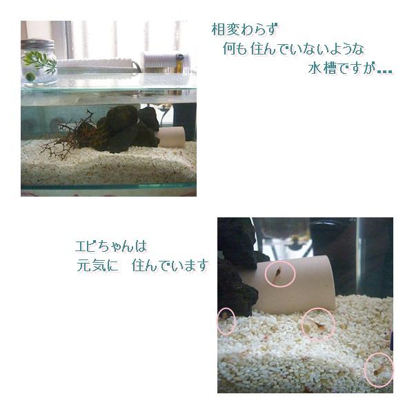cats_20120112131314.jpg