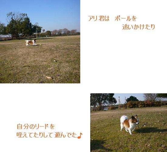 cats_20120117103115.jpg