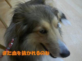 100615_122356_0000a.jpg