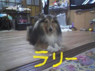 2010-12-27_0002a.jpg