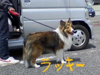 20100418_0004a.jpg
