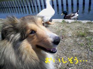 20100501_00031.jpg