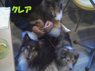20100523_0006a.jpg