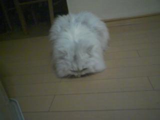 2011-01-19_0012.jpg
