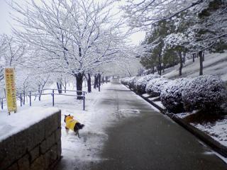2011-02-11_0005.jpg
