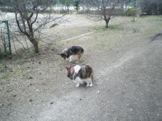 2011-02-20_0005.jpg