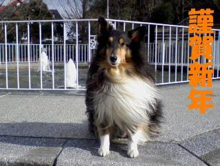 2011-01-01_0002あ