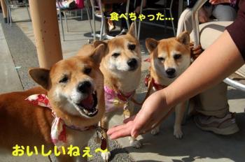4_20091014230943.jpg