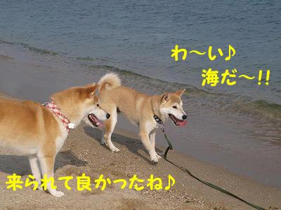 わーい海だ♪
