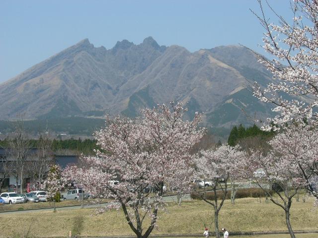根子岳と桜