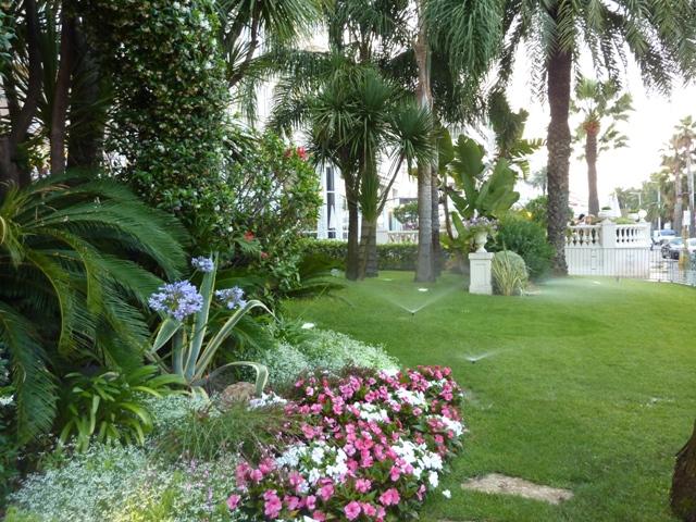 朝 ホテルの植栽