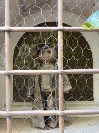網の中のネコ