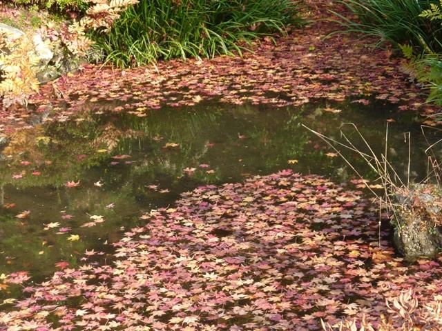 御殿前の池