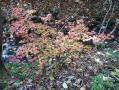 笹平の紅葉-2