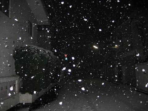 2010初雪 017