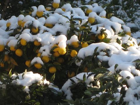 2010雪の朝 003