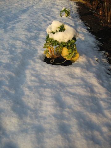 2010初雪 021