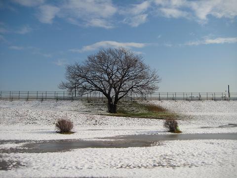 2010雪の朝 014