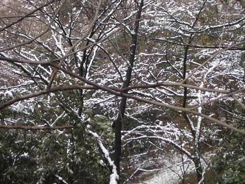 2010雪の朝 062