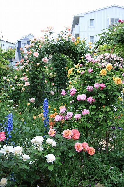 IMG_7521ゆうさんのお庭