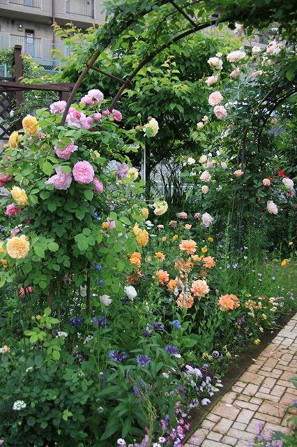 IMG_7528ゆうさんのお庭