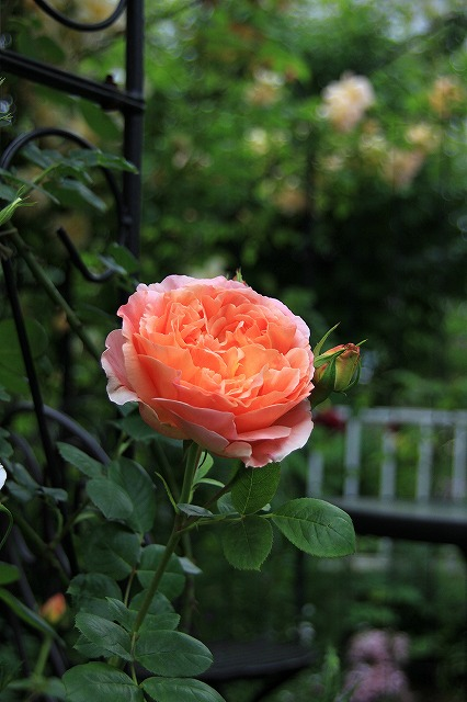 IMG_7558ゆうさんのお庭