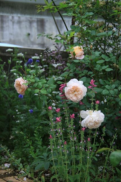 IMG_7588ゆうさんのお庭