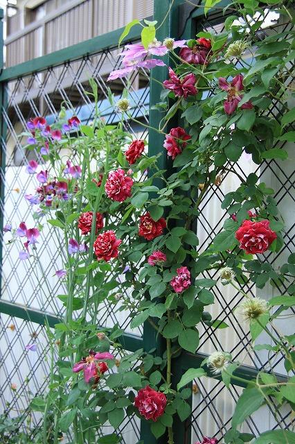 IMG_7601ゆうさんのお庭