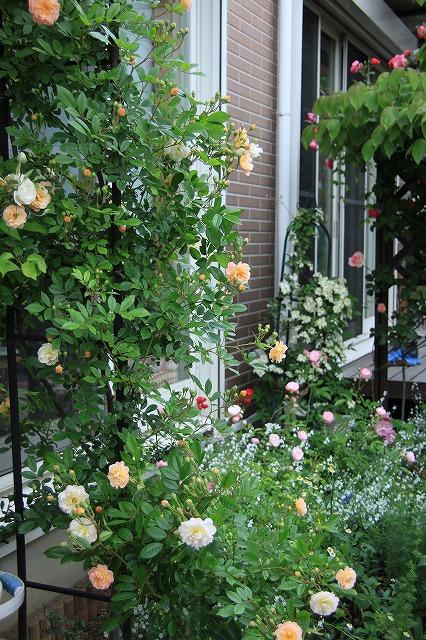 IMG_7622ゆうさんのお庭
