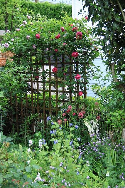 IMG_7868アニスさんのお庭