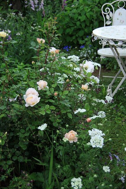 IMG_7872アニスさんのお庭