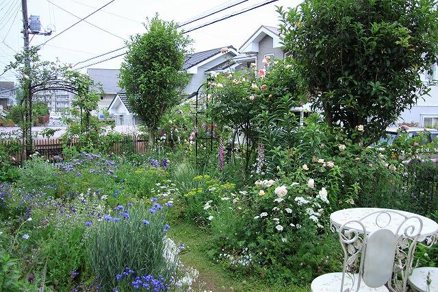 IMG_7879アニスさんのお庭