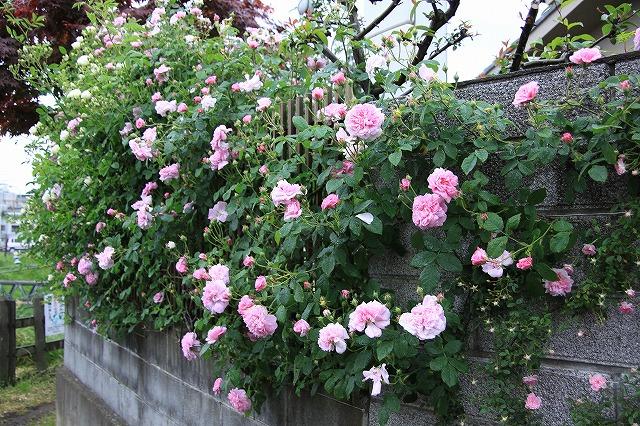 IMG_7884おじむくさんのお庭