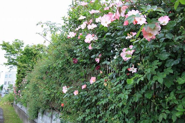 IMG_7887おじむくさんのお庭