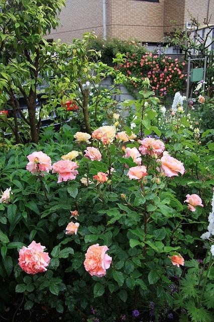 IMG_7909おじむくさんのお庭