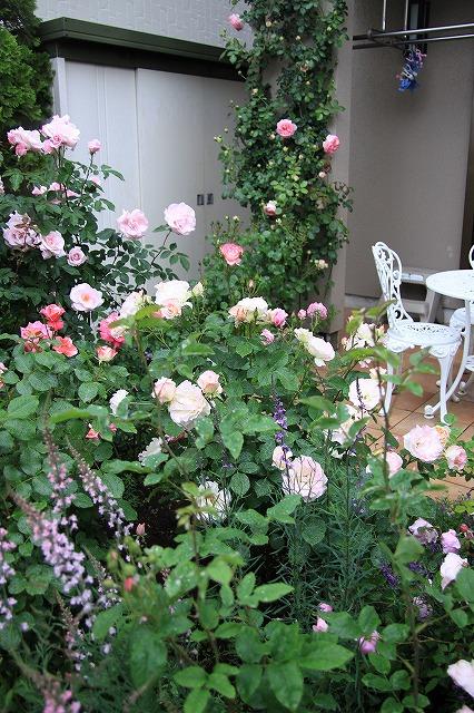 IMG_7910おじむくさんのお庭