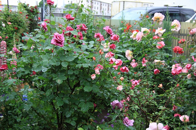 IMG_7913おじむくさんのお庭