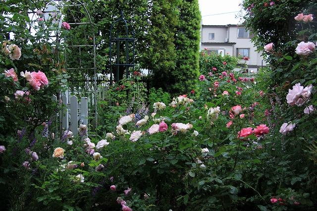IMG_7924おじむくさんのお庭