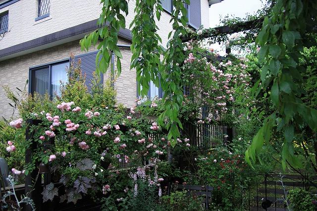 IMG_7925ジェイジェイさんのお庭