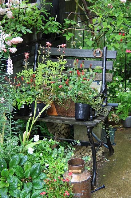 IMG_7928ジェイジェイさんのお庭