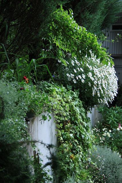 IMG_7932ジェイジェイさんのお庭
