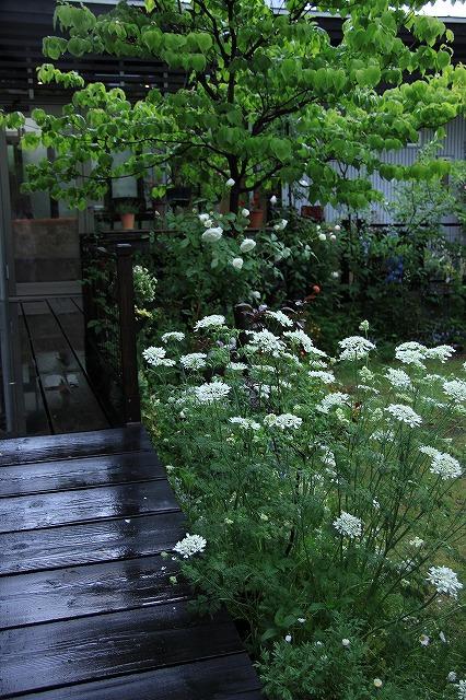 IMG_7940ジェイジェイさんのお庭