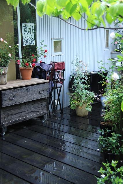 IMG_7955ジェイジェイさんのお庭