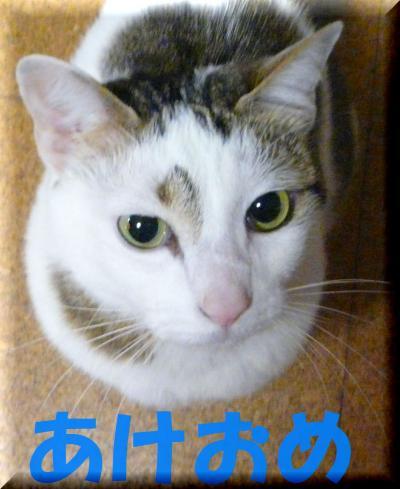 006a_convert_20100101090404.jpg